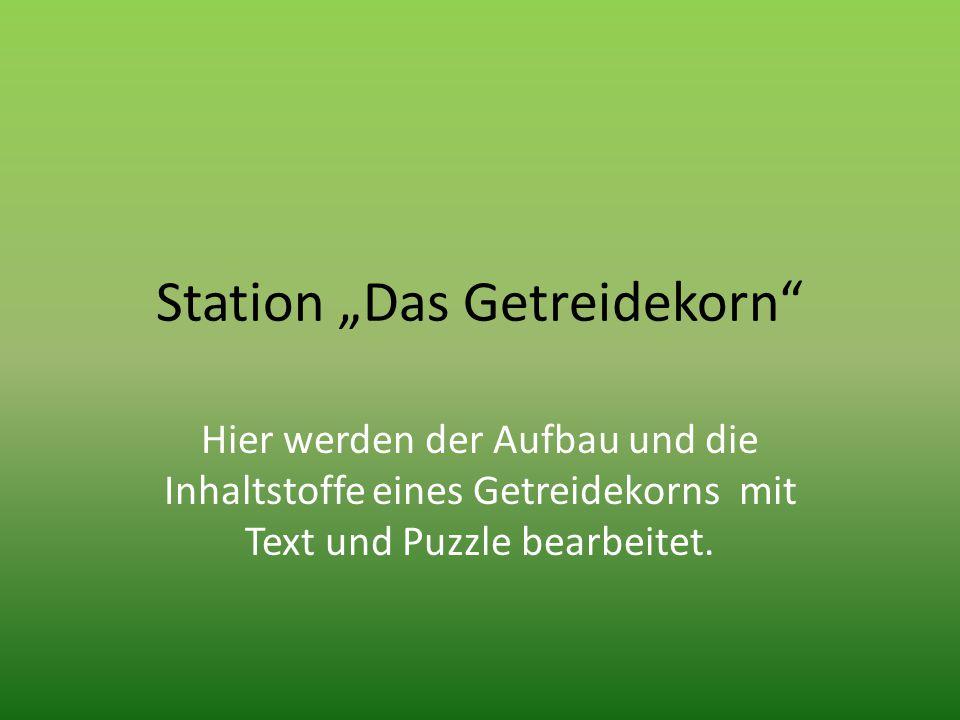 """Station """"Das Getreidekorn"""" Hier werden der Aufbau und die Inhaltstoffe eines Getreidekorns mit Text und Puzzle bearbeitet."""