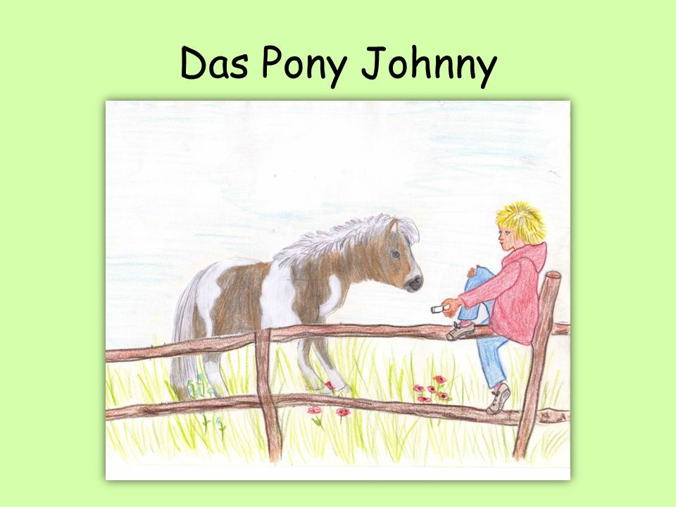 Das Pony Johnny