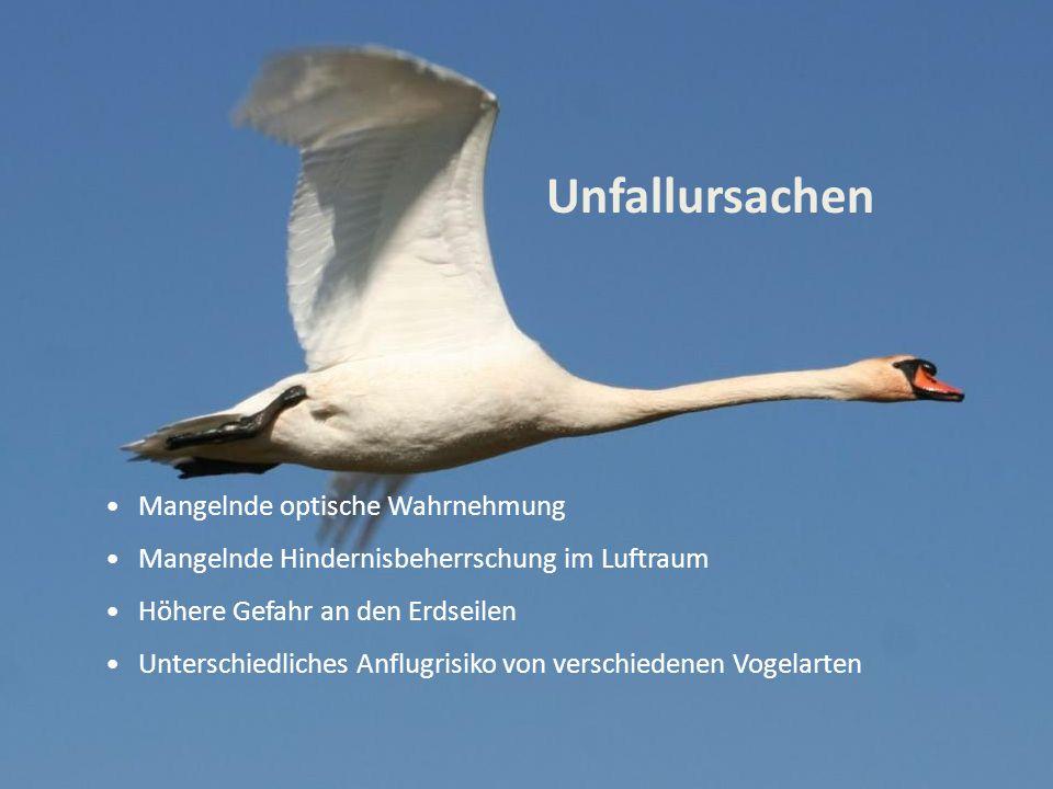 Unfallursachen Mangelnde optische Wahrnehmung Mangelnde Hindernisbeherrschung im Luftraum Höhere Gefahr an den Erdseilen Unterschiedliches Anflugrisiko von verschiedenen Vogelarten