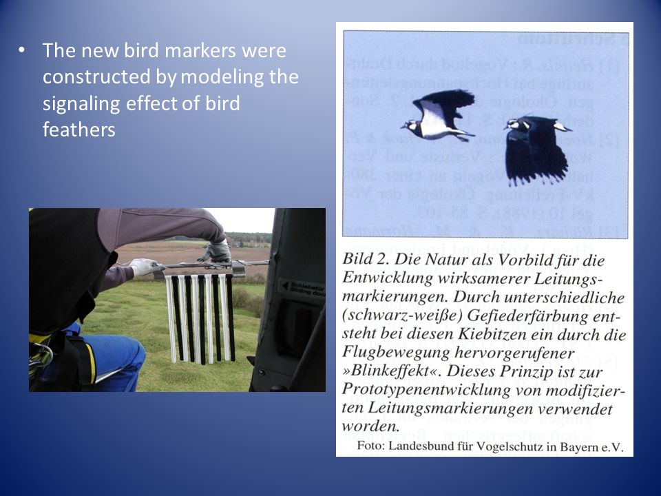 The new bird markers were constructed by modeling the signaling effect of bird feathers