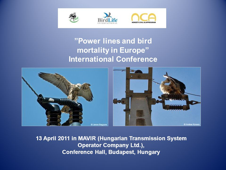 "13 April 2011 in MAVIR (Hungarian Transmission System Operator Company Ltd.), Conference Hall, Budapest, Hungary ""Power lines and bird mortality in Eu"