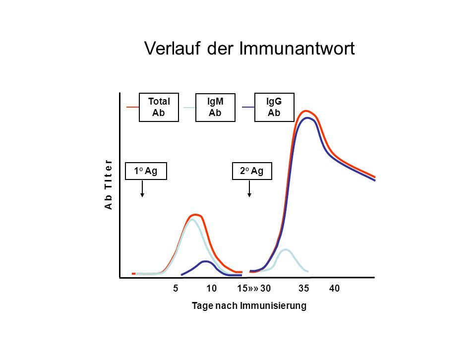 1 o Ag 2 o Ag Total Ab IgM Ab IgG Ab 5 10 15»» 30 35 40 A b T i t e r Tage nach Immunisierung Verlauf der Immunantwort