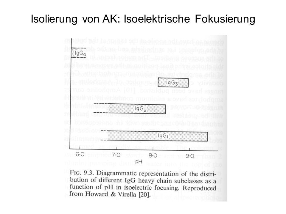 Isolierung von AK: Isoelektrische Fokusierung