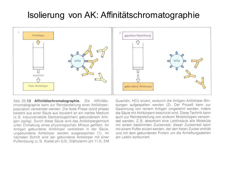 Isolierung von AK: Affinitätschromatographie