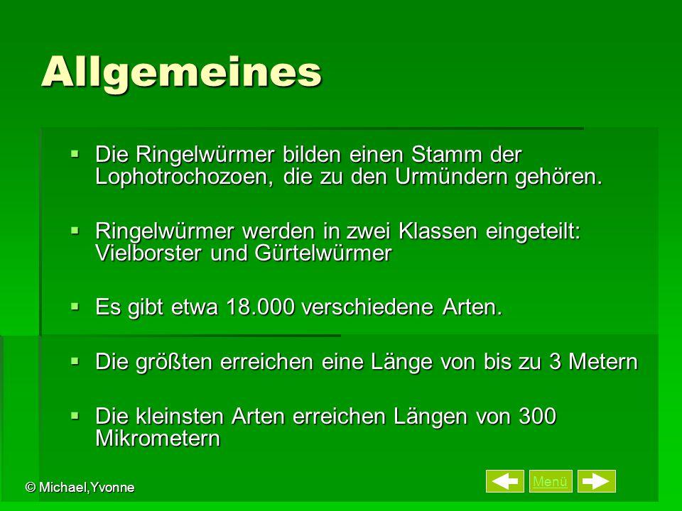 Menü © Michael,Yvonne Allgemeines  Die Ringelwürmer bilden einen Stamm der Lophotrochozoen, die zu den Urmündern gehören.