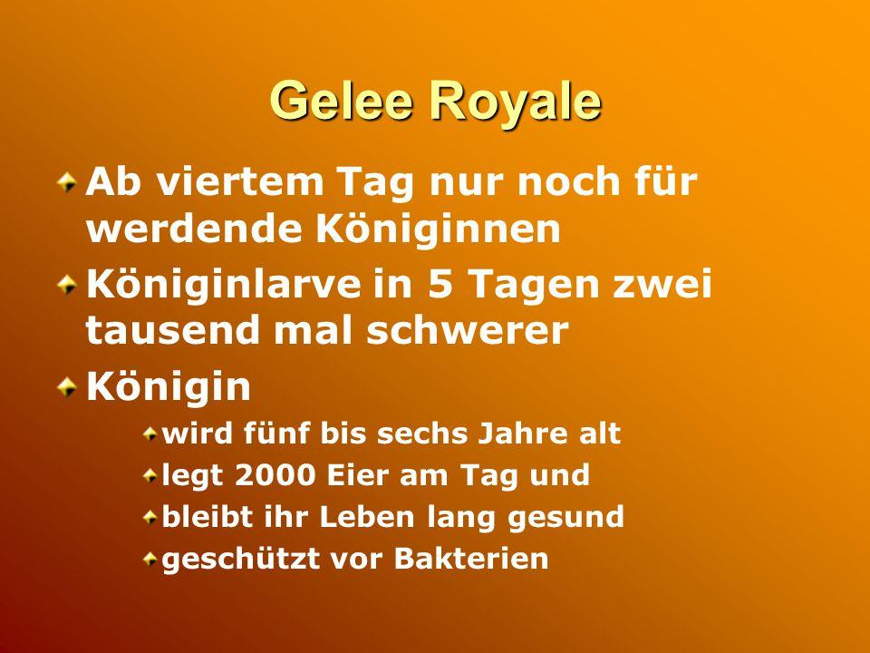 Gewinnung von Gelee Royale Königinnenzucht Zugabe von Weiselzellen (Umlarvverfahren) nach drei Tagen Entnahme der Wabe mit Weiselzellen Entfernung der Larven Aufsaugen des Gelee Royale Ernte: 250 bis 500 g pro Stock und pro Jahr