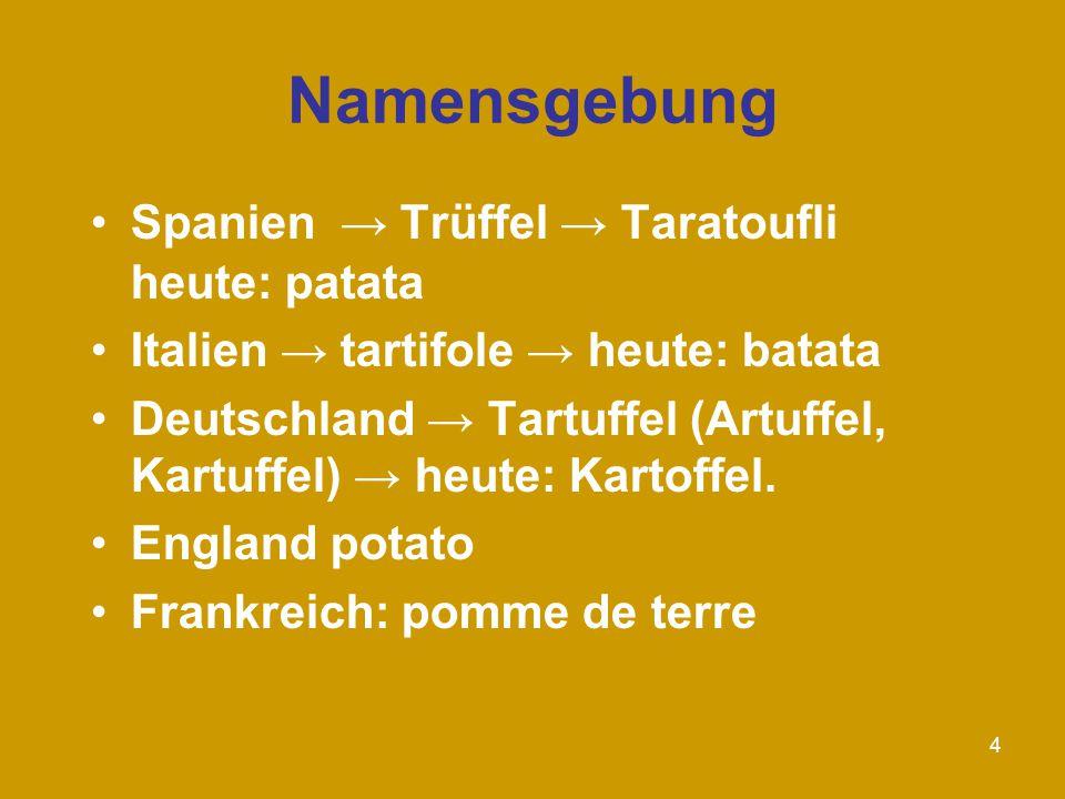 4 Namensgebung Spanien → Trüffel → Taratoufli heute: patata Italien → tartifole → heute: batata Deutschland → Tartuffel (Artuffel, Kartuffel) → heute: Kartoffel.