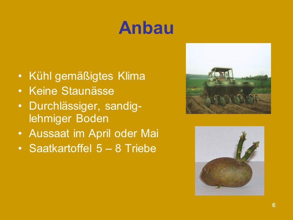 6 Anbau Kühl gemäßigtes Klima Keine Staunässe Durchlässiger, sandig- lehmiger Boden Aussaat im April oder Mai Saatkartoffel 5 – 8 Triebe