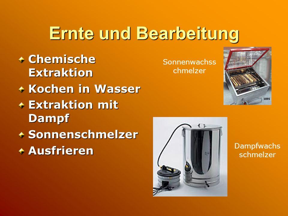 Ernte und Bearbeitung Chemische Extraktion Kochen in Wasser Extraktion mit Dampf SonnenschmelzerAusfrieren Sonnenwachss chmelzer Dampfwachs schmelzer