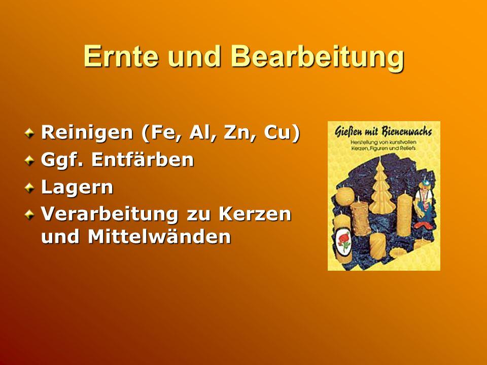 Ernte und Bearbeitung Reinigen (Fe, Al, Zn, Cu) Ggf.