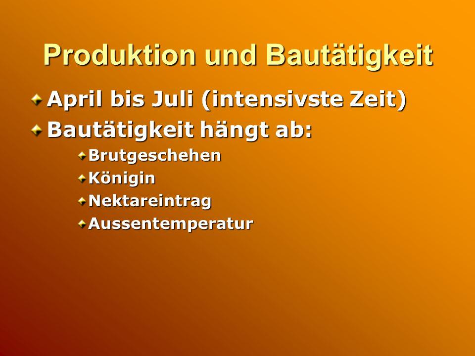 Produktion und Bautätigkeit April bis Juli (intensivste Zeit) Bautätigkeit hängt ab: BrutgeschehenKöniginNektareintragAussentemperatur
