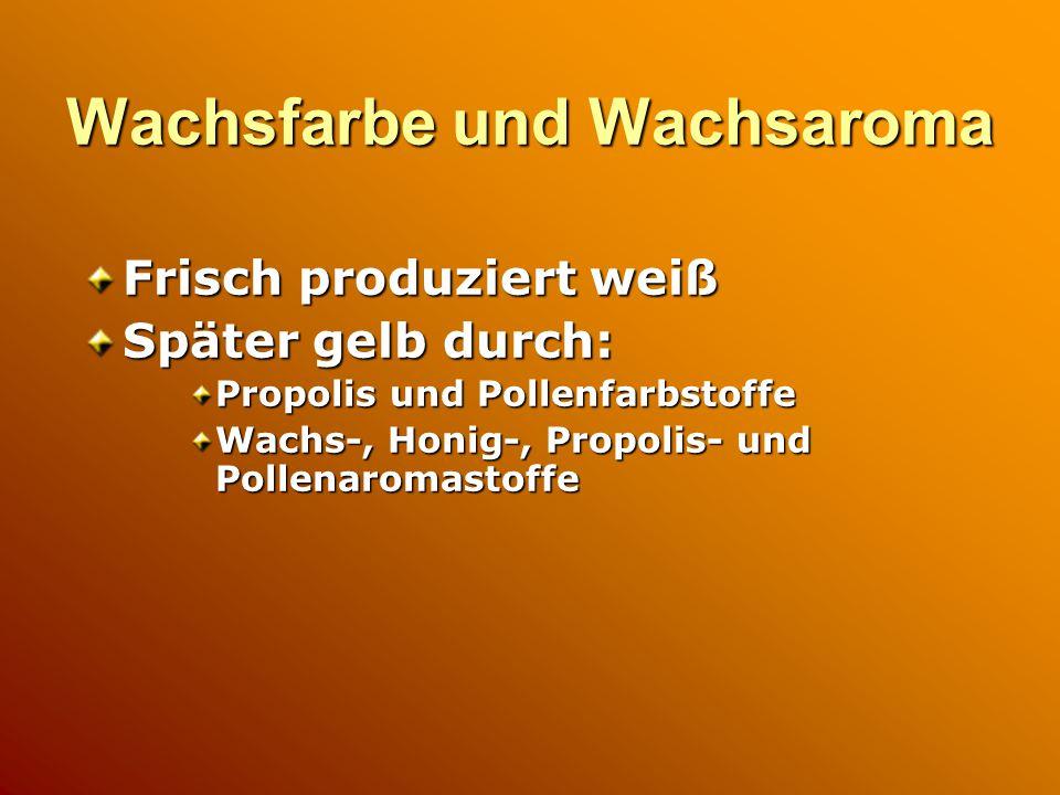 Wachsfarbe und Wachsaroma Frisch produziert weiß Später gelb durch: Propolis und Pollenfarbstoffe Wachs-, Honig-, Propolis- und Pollenaromastoffe