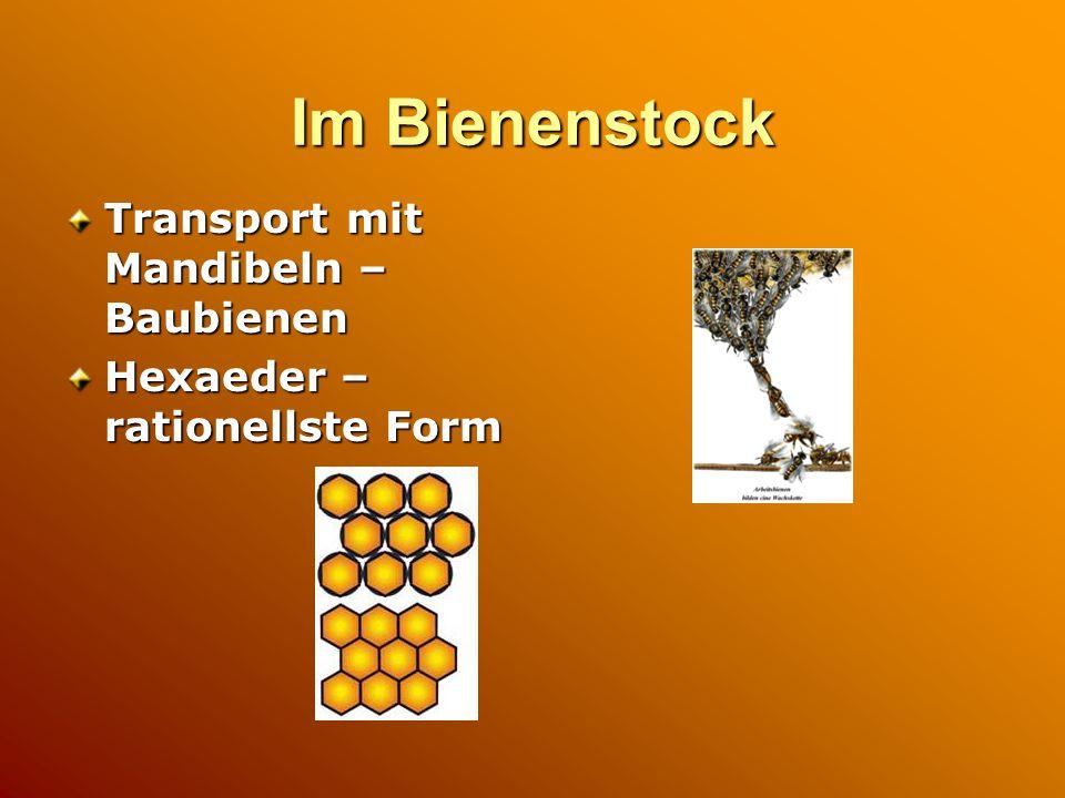 Im Bienenstock Transport mit Mandibeln – Baubienen Hexaeder – rationellste Form