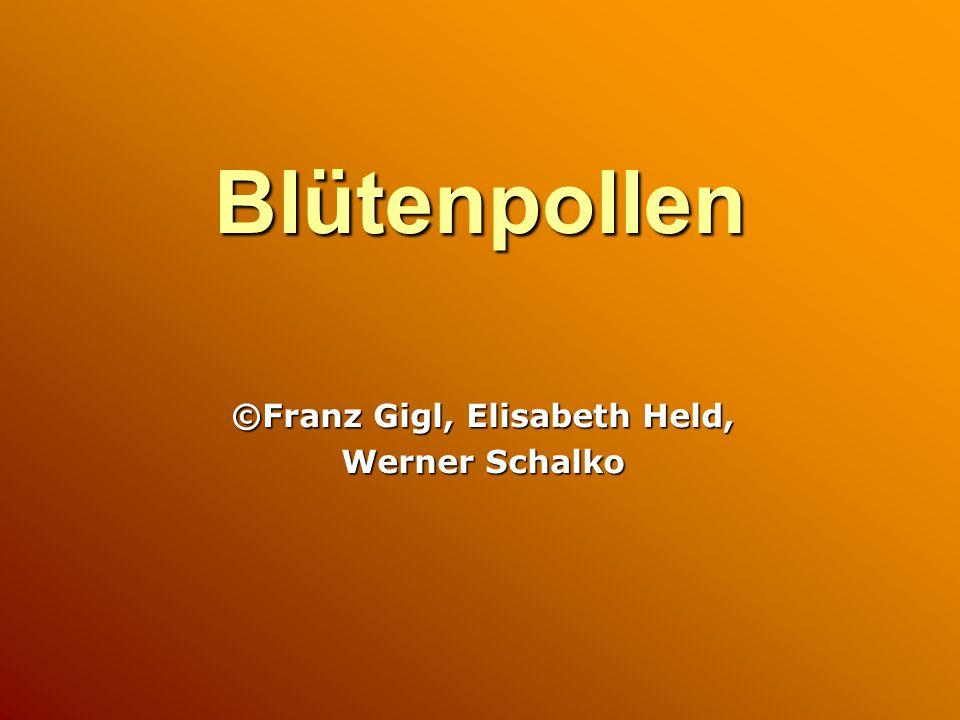 Blütenpollen ©Franz Gigl, Elisabeth Held, Werner Schalko