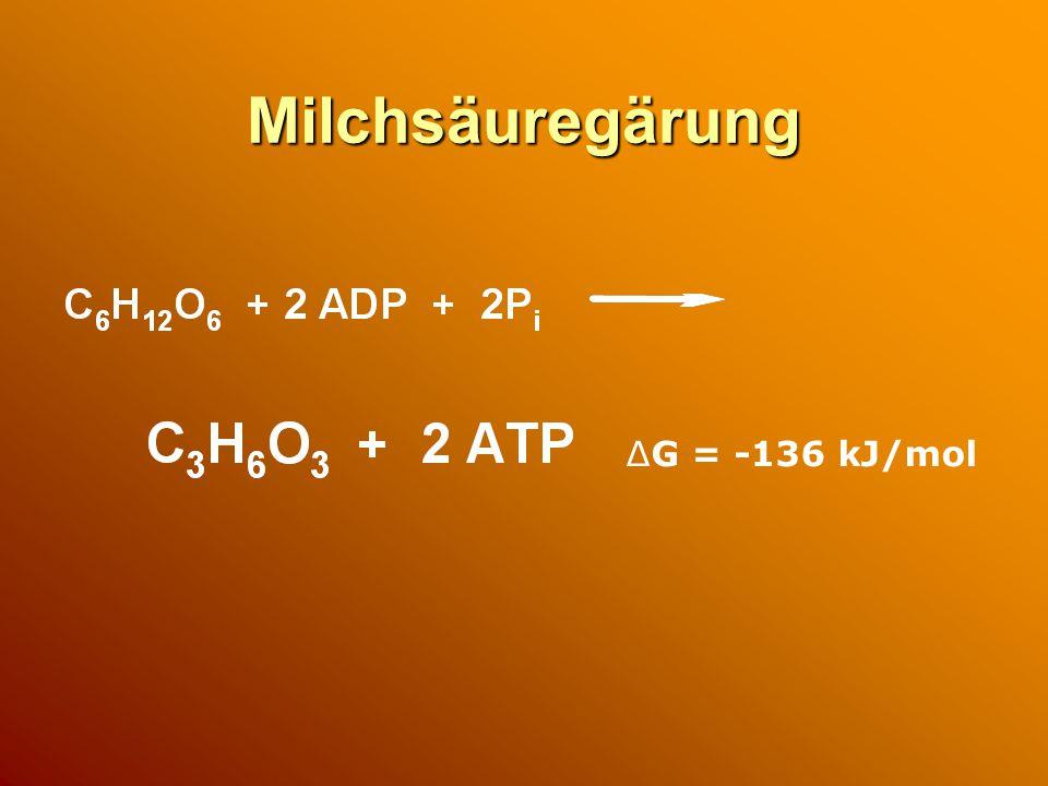Milchsäuregärung ΔG = -136 kJ/mol