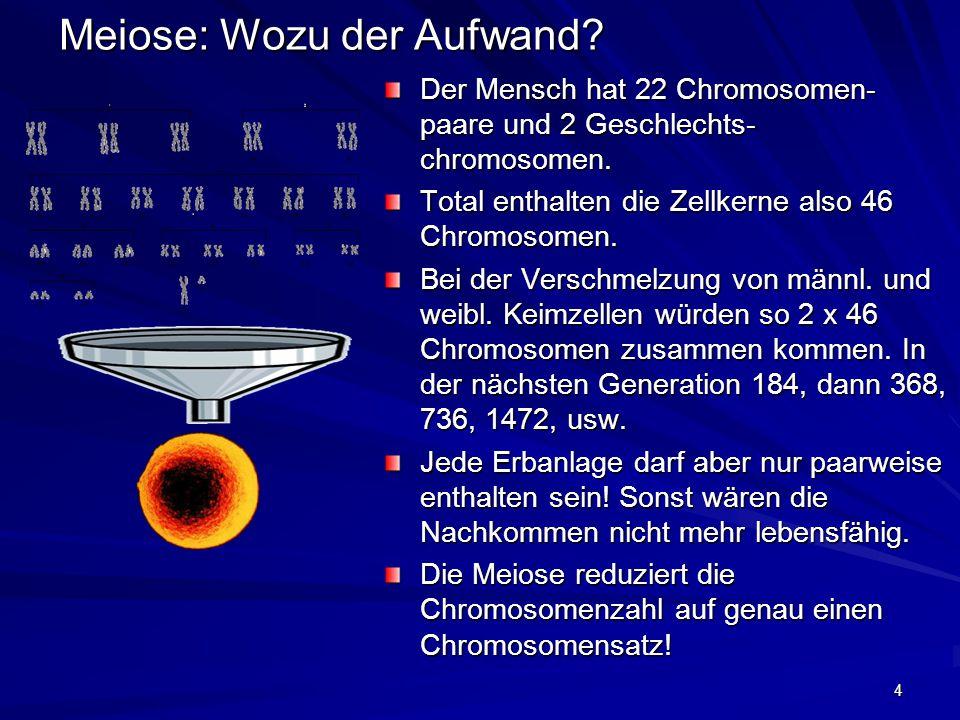 4 Meiose: Wozu der Aufwand? Der Mensch hat 22 Chromosomen- paare und 2 Geschlechts- chromosomen. Total enthalten die Zellkerne also 46 Chromosomen. Be