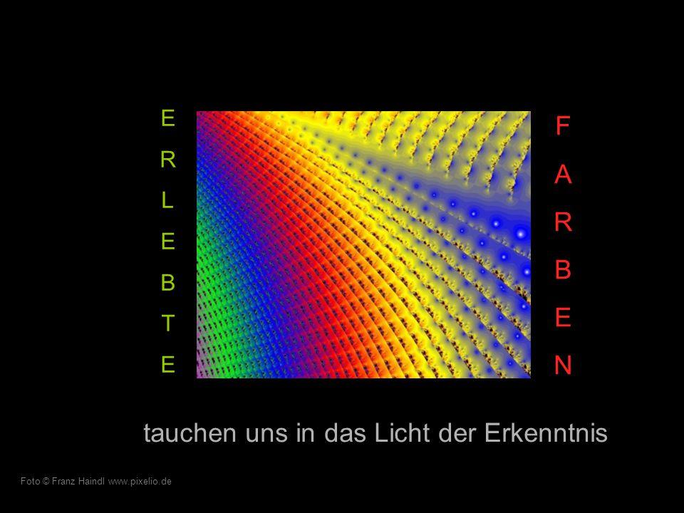…und berühren die Krümmung der Iris. Foto © Viola Boxberger www.pixelio.de