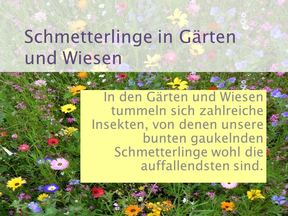 Schmetterlinge in Gärten und Wiesen In den Gärten und Wiesen tummeln sich zahlreiche Insekten, von denen unsere bunten gaukelnden Schmetterlinge wohl die auffallendsten sind.