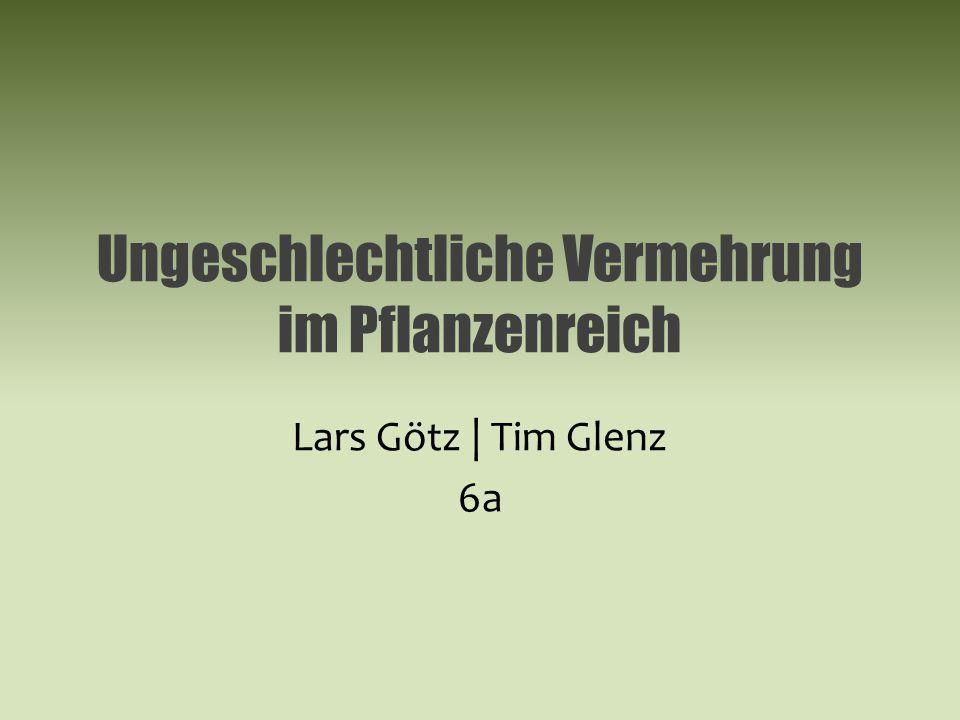 Ungeschlechtliche Vermehrung im Pflanzenreich Lars Götz | Tim Glenz 6a