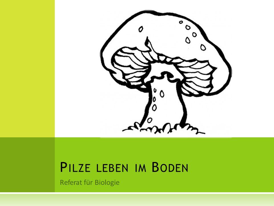 Referat für Biologie P ILZE LEBEN IM B ODEN