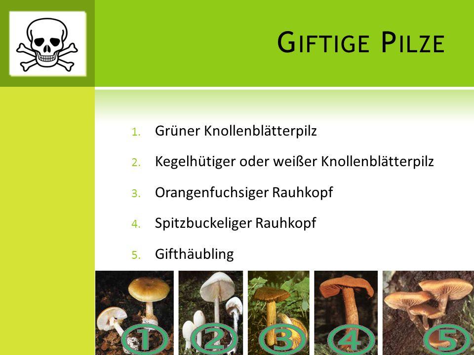 G IFTIGE P ILZE 1. Grüner Knollenblätterpilz 2. Kegelhütiger oder weißer Knollenblätterpilz 3. Orangenfuchsiger Rauhkopf 4. Spitzbuckeliger Rauhkopf 5