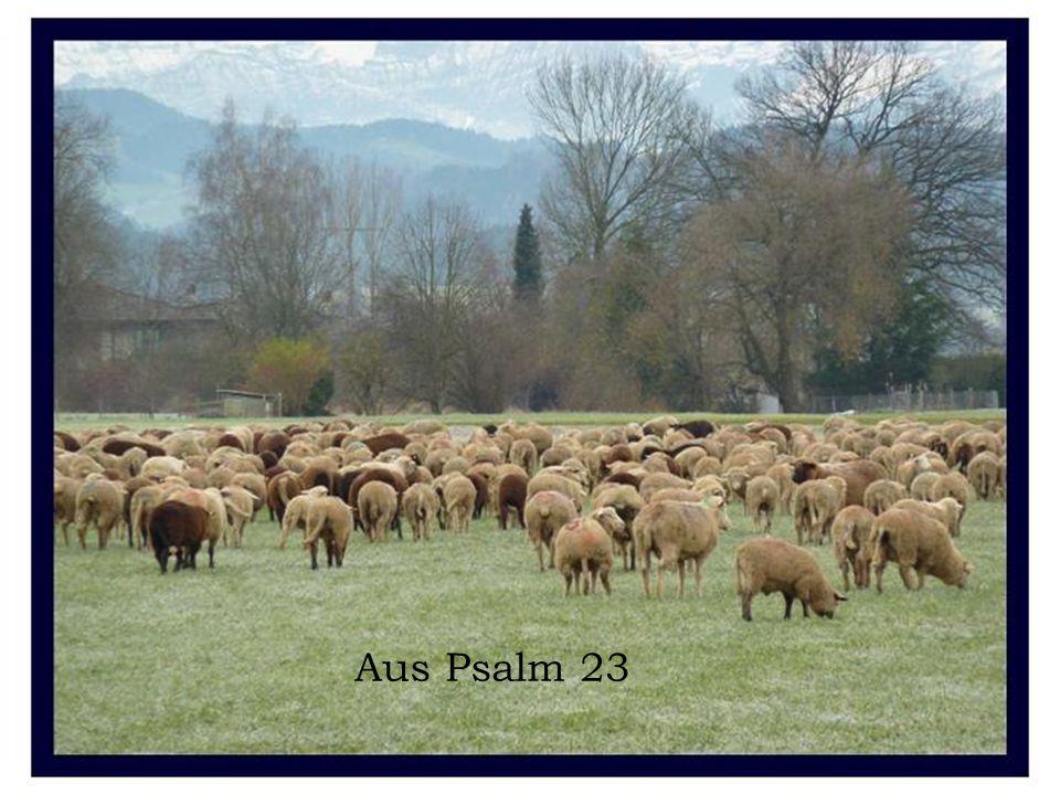 Aus Psalm 23