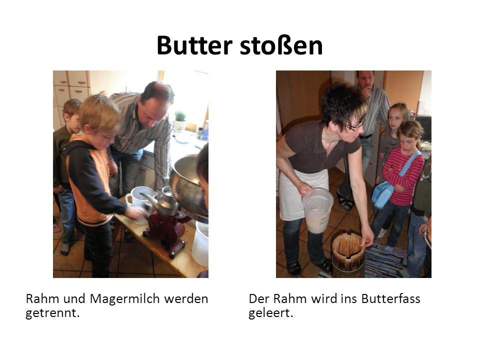 Butter stoßen Rahm und Magermilch werden getrennt. Der Rahm wird ins Butterfass geleert.