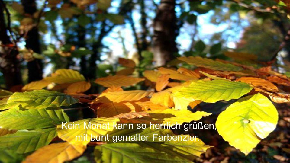 Die Blütenblätter Dir zu Füßen, sie rascheln laut wie Goldpapier.