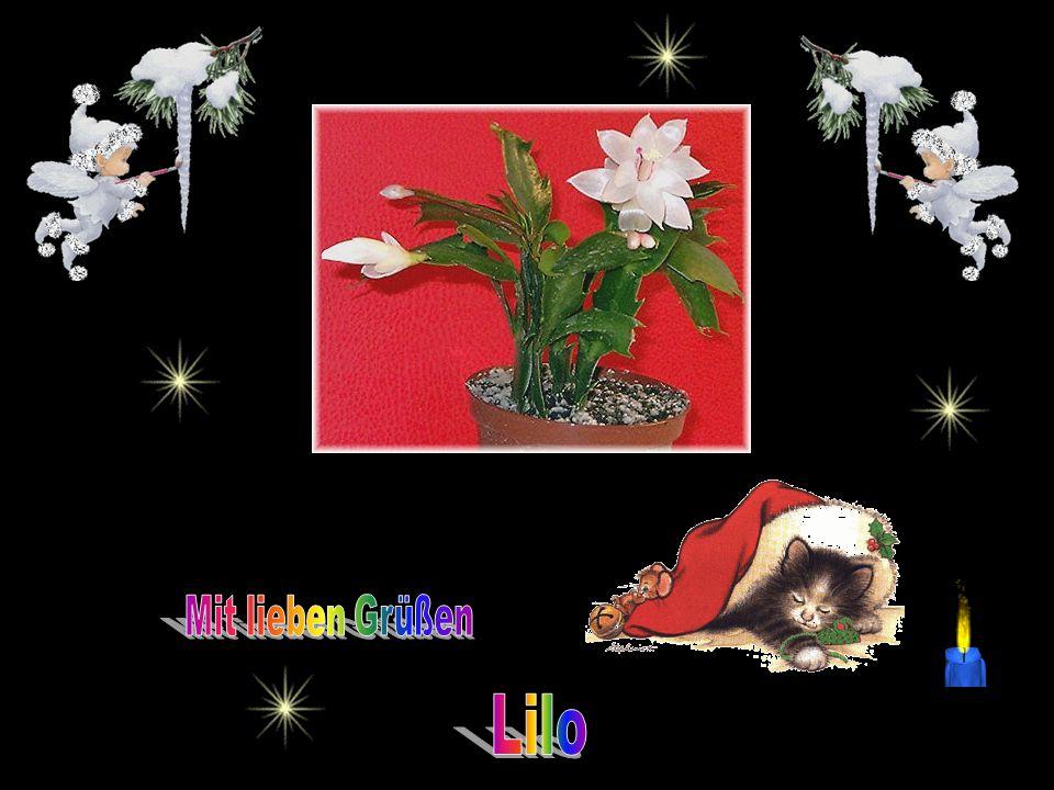 - Advent - von Rainer Maria Rilke Es treibt der Wind im Winterwalde die Flockenherde wie ein Hirt und manche Tanne ahnt wie bald sie fromm und lichter heilig wird; und lauscht hinaus.
