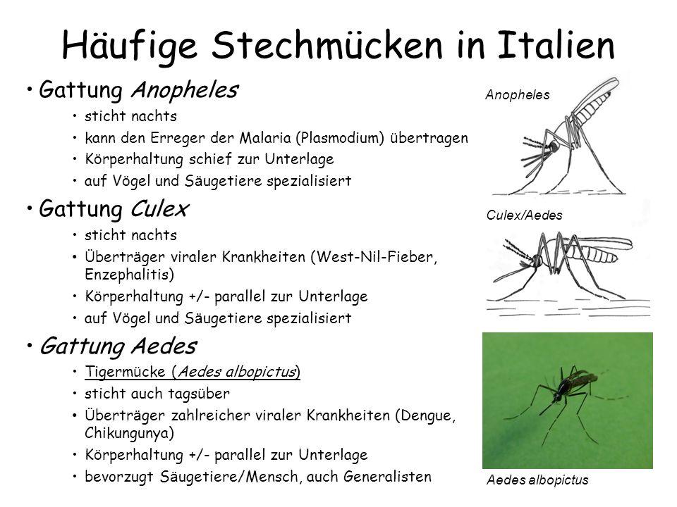 Häufige Stechmücken in Italien Gattung Anopheles sticht nachts kann den Erreger der Malaria (Plasmodium) ü bertragen K ö rperhaltung schief zur Unterlage auf V ö gel und S ä ugetiere spezialisiert Gattung Culex sticht nachts Ü bertr ä ger viraler Krankheiten (West-Nil-Fieber, Enzephalitis) K ö rperhaltung +/- parallel zur Unterlage auf V ö gel und S ä ugetiere spezialisiert Gattung Aedes Tigerm ü cke (Aedes albopictus) sticht auch tags ü ber Ü bertr ä ger zahlreicher viraler Krankheiten (Dengue, Chikungunya) K ö rperhaltung +/- parallel zur Unterlage bevorzugt S ä ugetiere/Mensch, auch Generalisten Anopheles Culex/Aedes Aedes albopictus