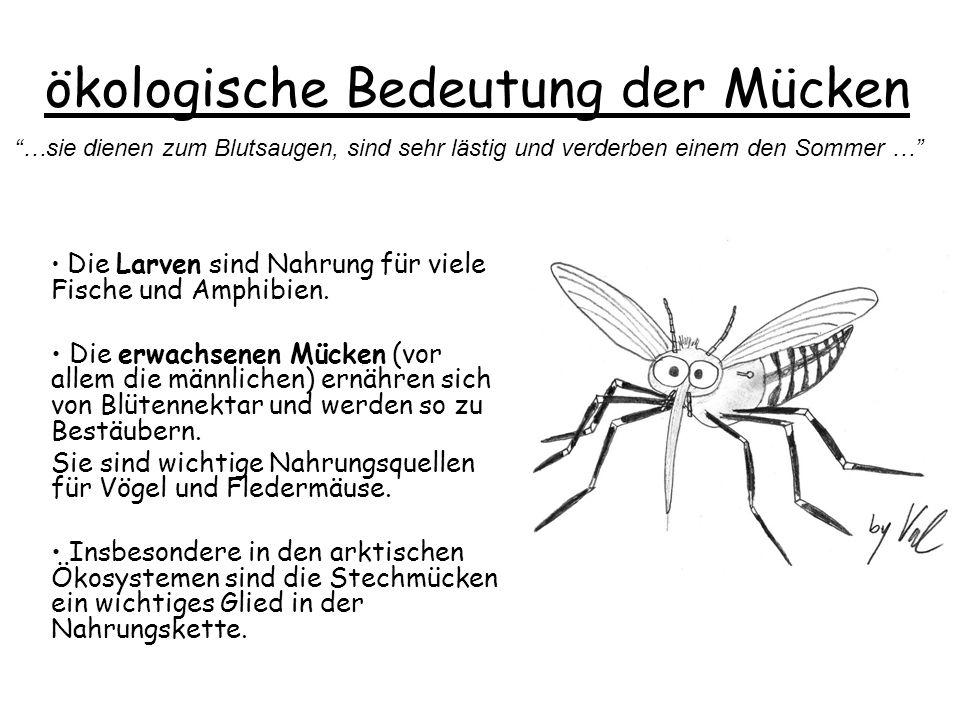 ökologische Bedeutung der Mücken Die Larven sind Nahrung für viele Fische und Amphibien.