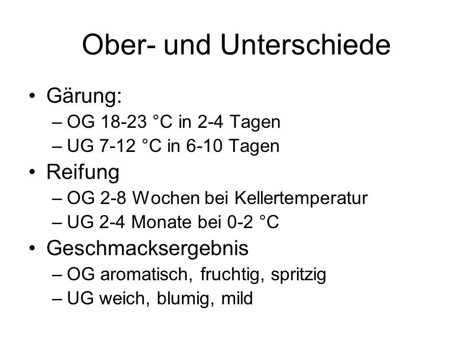 Ober- und Unterschiede Gärung: –OG 18-23 °C in 2-4 Tagen –UG 7-12 °C in 6-10 Tagen Reifung –OG 2-8 Wochen bei Kellertemperatur –UG 2-4 Monate bei 0-2