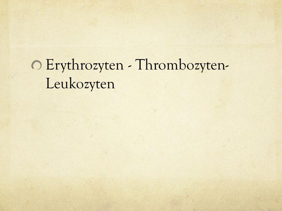 Erythrozyten - Thrombozyten- Leukozyten