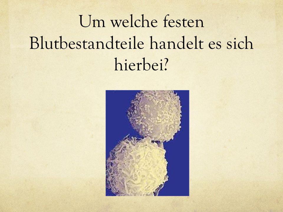 Weisse Blutkörperchen