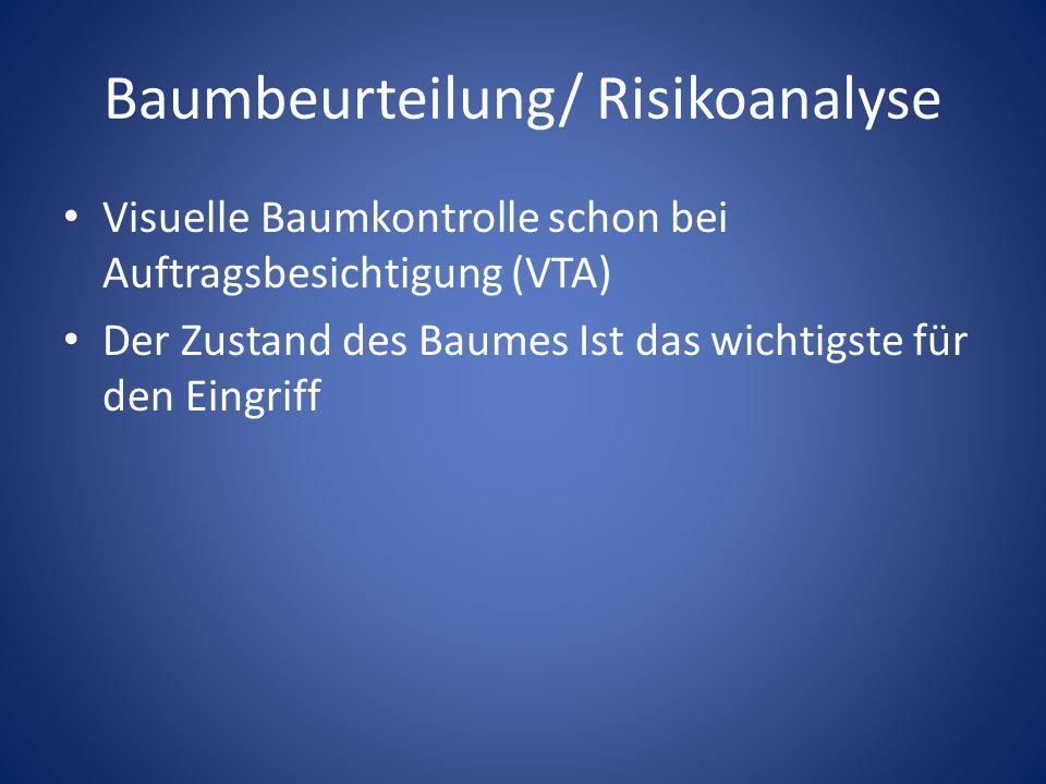 Baumbeurteilung/ Risikoanalyse Baumhöhe: Seillänge Reicht meine Kletterfähigkeit aus.