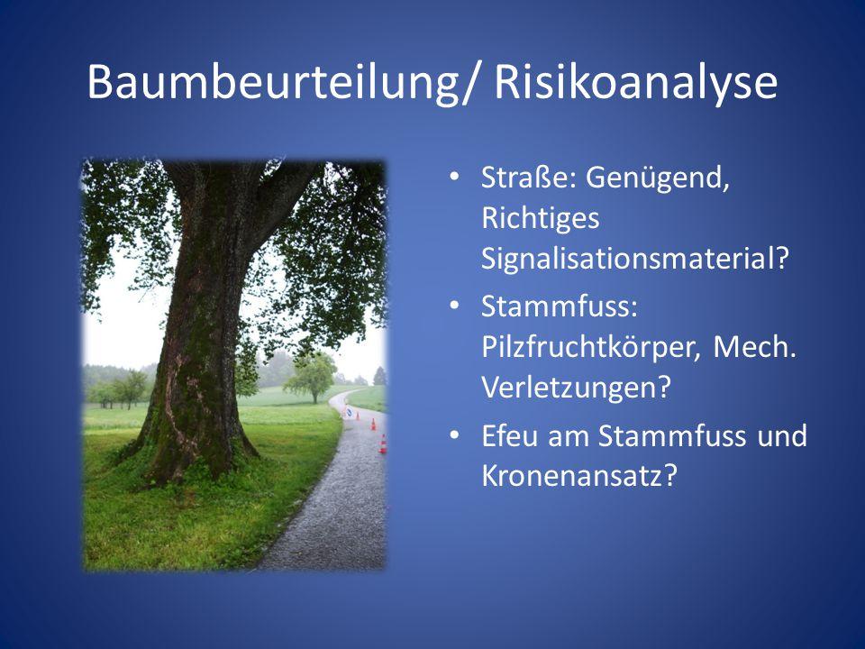 Baumbeurteilung/ Risikoanalyse Straße: Genügend, Richtiges Signalisationsmaterial? Stammfuss: Pilzfruchtkörper, Mech. Verletzungen? Efeu am Stammfuss