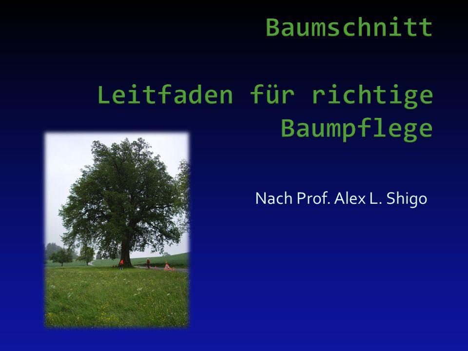 Grundsätzlich: - Lichtraumprofiele an Jungbäumen frühzeitig Erstellen - Keine Astabname ohne Ableitung, min.