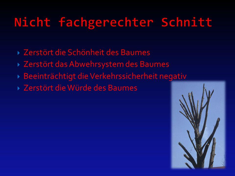 Zerstört die Schönheit des Baumes  Zerstört das Abwehrsystem des Baumes  Beeinträchtigt die Verkehrssicherheit negativ  Zerstört die Würde des Ba