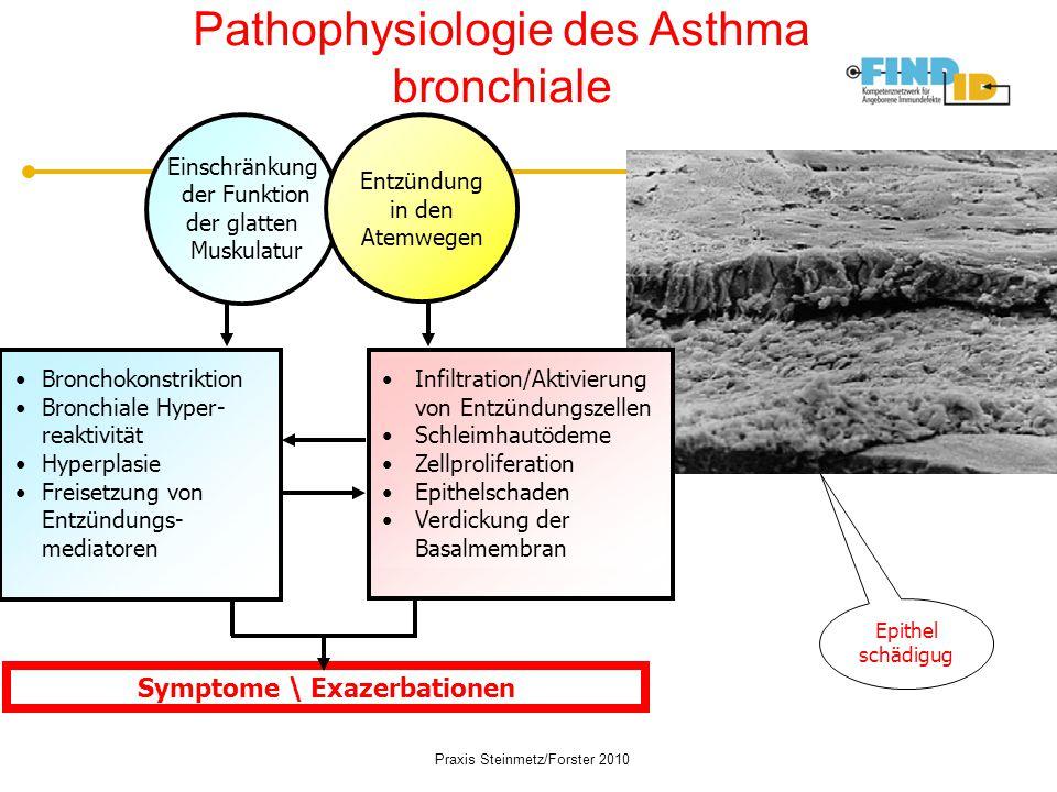 Pathophysiologie des Asthma bronchiale Einschränkung der Funktion der glatten Muskulatur Entzündung in den Atemwegen Infiltration/Aktivierung von Entz
