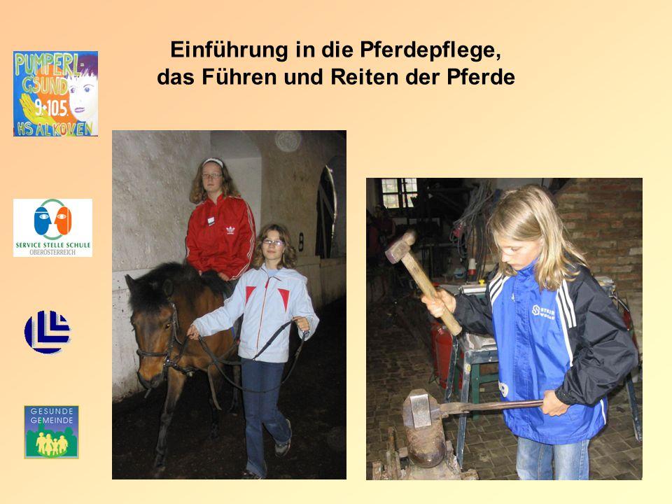 Einführung in die Pferdepflege, das Führen und Reiten der Pferde