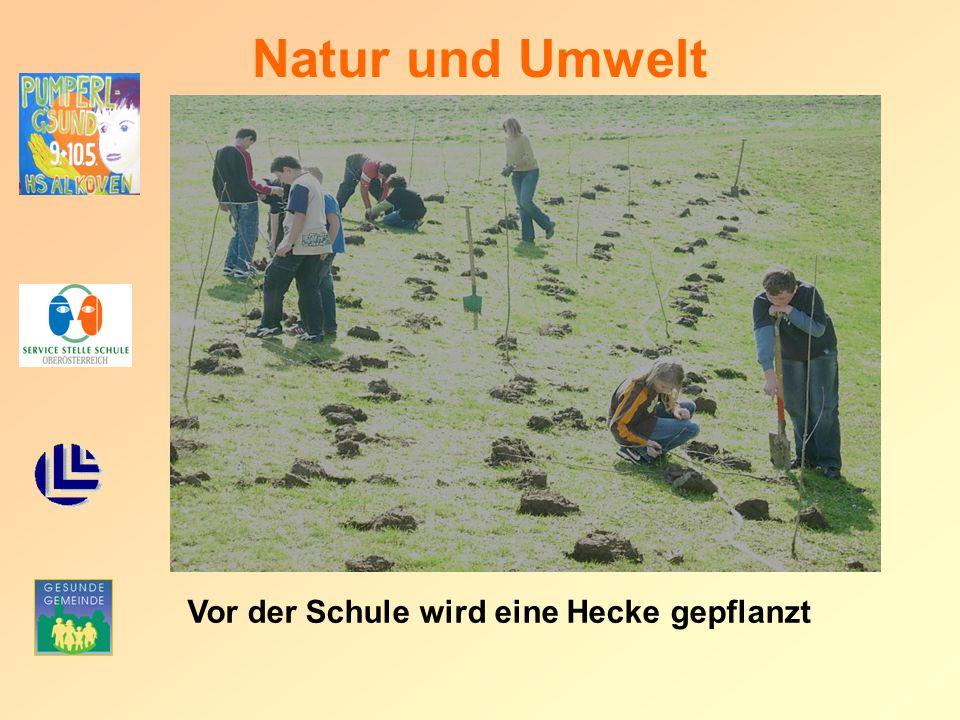 Natur und Umwelt Vor der Schule wird eine Hecke gepflanzt