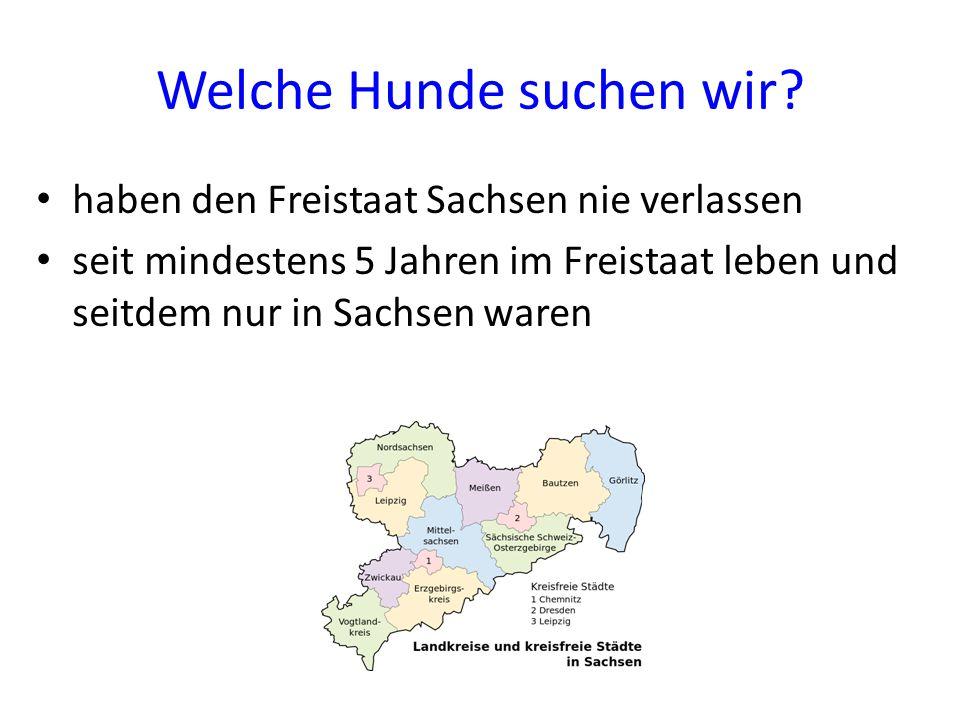 Welche Hunde suchen wir? haben den Freistaat Sachsen nie verlassen seit mindestens 5 Jahren im Freistaat leben und seitdem nur in Sachsen waren