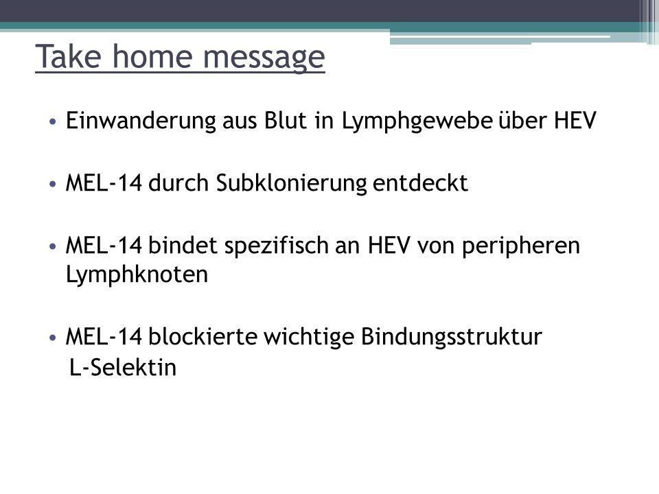 Take home message Einwanderung aus Blut in Lymphgewebe über HEV MEL-14 durch Subklonierung entdeckt MEL-14 bindet spezifisch an HEV von peripheren Lymphknoten MEL-14 blockierte wichtige Bindungsstruktur L-Selektin