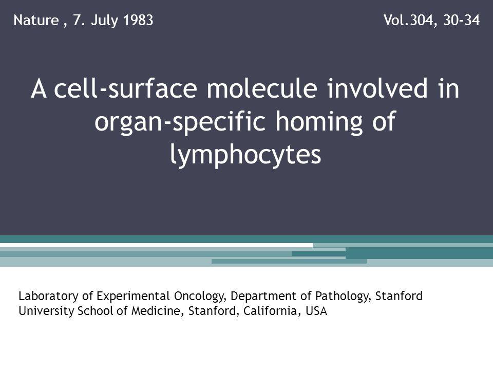 Erklärungen Monoklonaler Antikörper AK die von einem einzigen B-Lymphzyten produziert werden und gegen ein einzelnes Epitop gerichtet sind Hybridome Verschmelzung von AK-produzierenden B-Zellen mit Zellen einer Myelom-Zelllinie -> hybride Zellen die AK mit einer best.