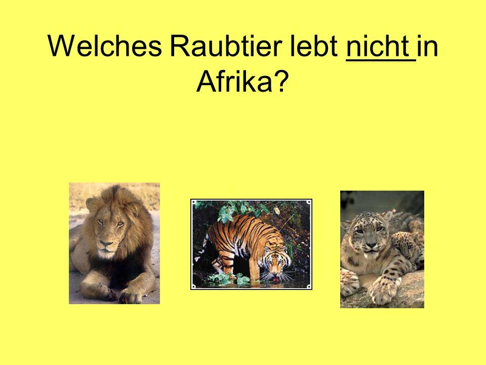 Welches Raubtier lebt nicht in Afrika?