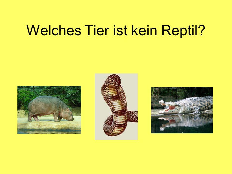 Welches Tier ist kein Reptil?