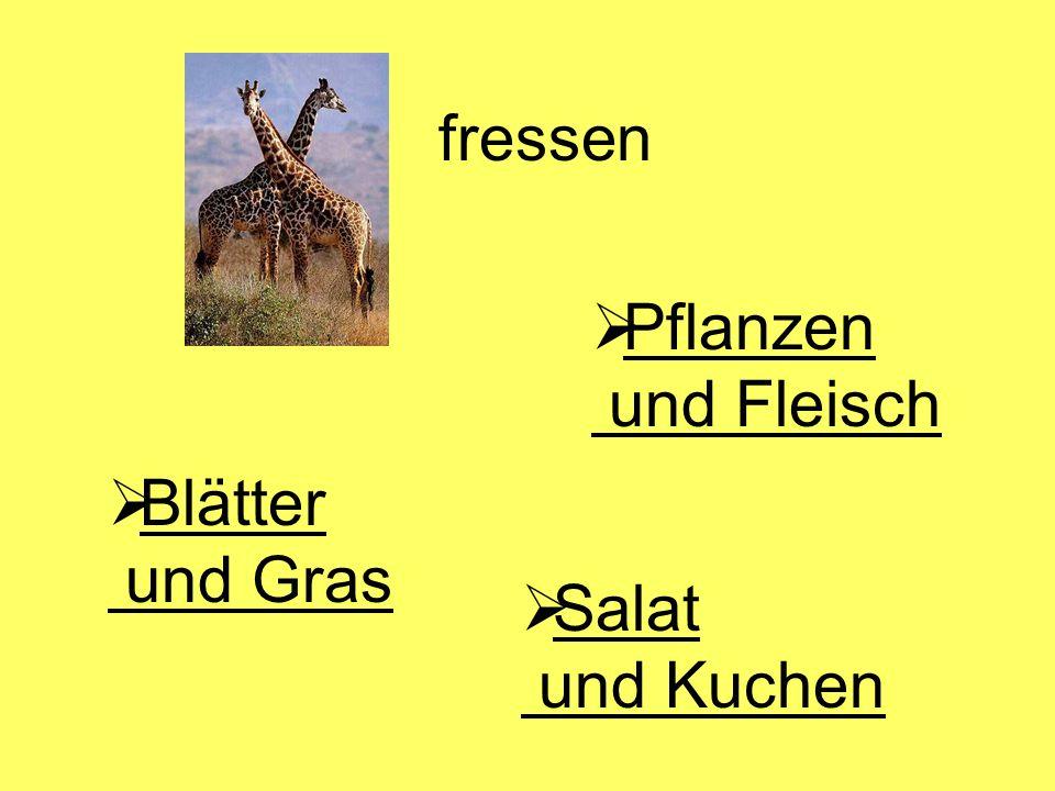 fressen  Blätter und Gras Blätter und Gras  Pflanzen und Fleisch Pflanzen und Fleisch  Salat und Kuchen Salat und Kuchen