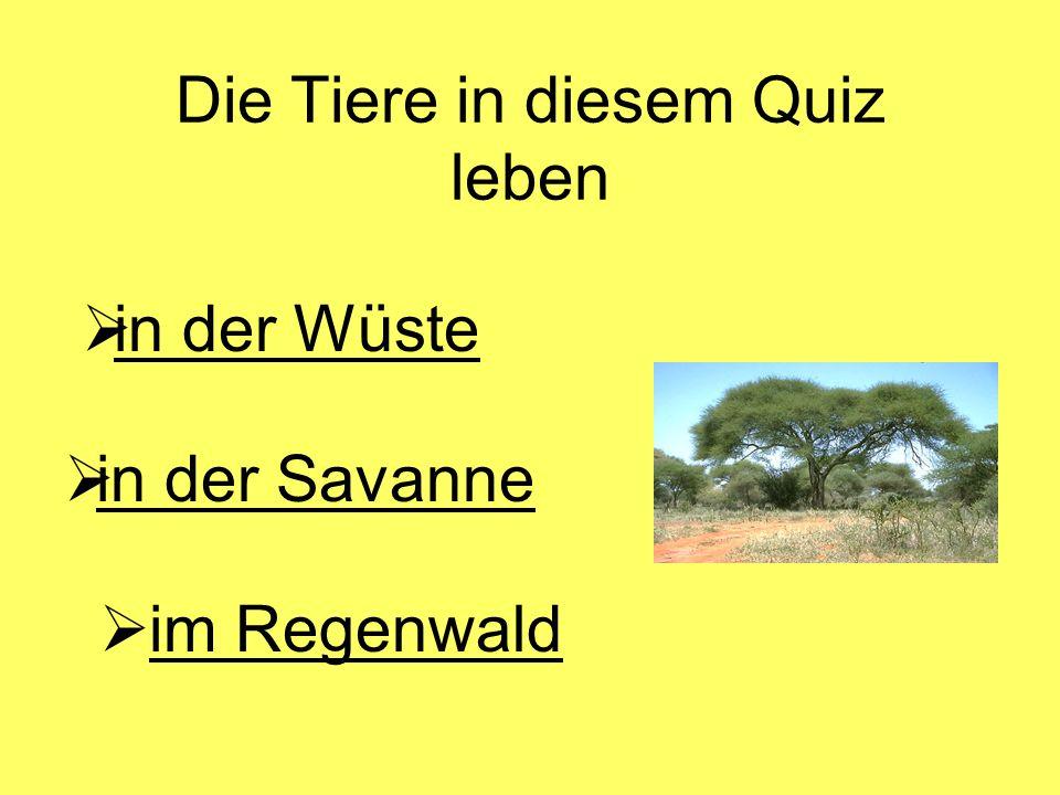 Die Tiere in diesem Quiz leben  in der Wüste in der Wüste  in der Savanne in der Savanne  im Regenwaldim Regenwald