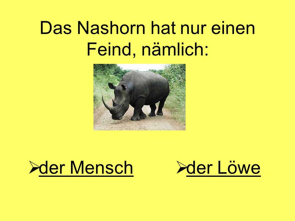 Das Nashorn hat nur einen Feind, nämlich:  der Mensch der Mensch  der Löwe der Löwe