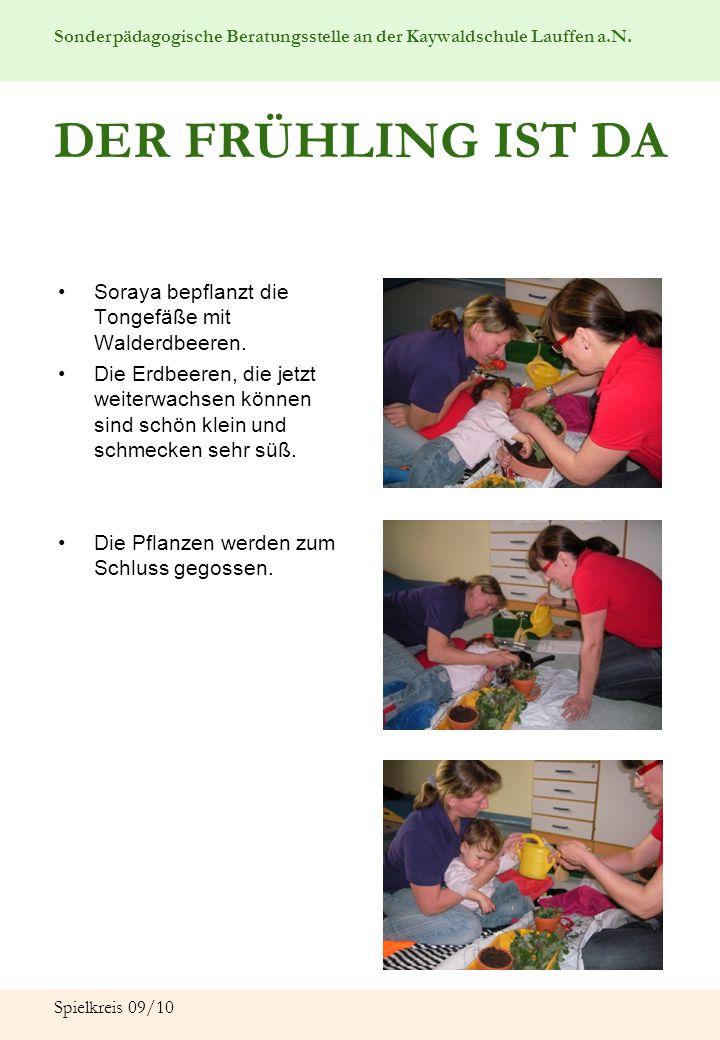 Sonderpädagogische Beratungsstelle an der Kaywaldschule Lauffen a.N. Spielkreis 09/10 DER FRÜHLING IST DA Soraya bepflanzt die Tongefäße mit Walderdbe
